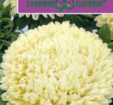 Семена Астры Баллон желтый 0,1г