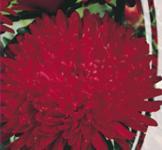 Семена Астры Ротер Турм 0,25г