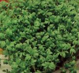 Семена крес-салата Ажур 1г