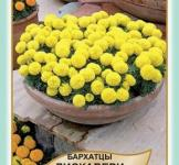 Семена Бархатцев Дискавери F1 желтые 10шт (Legutko Польша)