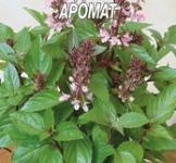 Семена базилика Гвоздичный аромат 0,3г