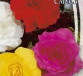 Семена Бегония Крупноцветковая смесь 10шт