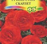 Семена   Бегония   Нон-Стоп  Скарлет 4шт.