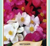 Семена Бегония вечноцветущая смесь 0,01г (Legutko Польша)