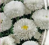 Семена Маргаритка Белоснежка 0,1г