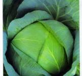 Семена капусты Бирюза 10г (Коуел Германия)