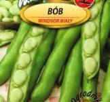 Семена бобов Белый Виндзор 50г (Legutko Польша)