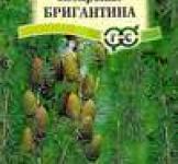 Семена Лиственница сибирская Бригантина 0,2 г (ТМ Гавриш)