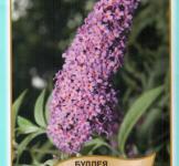 Семена Будлея Давида пурпурно-фиолетовая 0,01г (Legutko Польша)