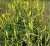 Семена донника (буркун) 1кг