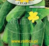 Семена огурца Цезарь 50шт (Roltiko Польша)