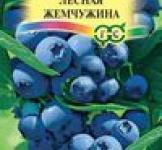 Семена Черника Лесная жемчужина 30шт