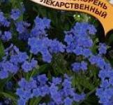 Семена чернокорня лекарственного Циноглоссум ТМ «Гавриш» (5шт)