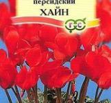 Семена  Цикламен  персидский  Хайн 3шт