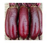 Семена свеклы столовой Цилиндра 100г (Roltico Польша)