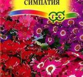 Семена Цинерария цветущая гибридная Симпатия 10шт (Гавриш)