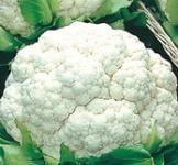 Семена капусты  цветной Фрюерте 0,5г