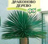 Семена Драцена  Драконово  дерева  3шт
