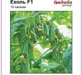 Семена огурца Эколь F1 10шт (Syngenta Голландия)