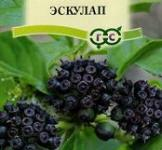 Семена Элеутерокок Эскулап  3 шт