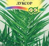 Семена Финик канарский Луксор 2шт (ТМ Гавриш)