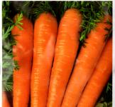 Семена моркови Флакко 2г (Коуел Италия)