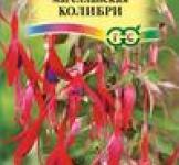 Семена Фуксия Колибри магелланская 10шт (Гавриш)