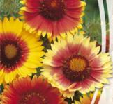 Семена Гайлардия Крупноцветковая 0,3г