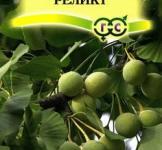 Семена гинкго билоба Реликт ТМ «Гавриш» (2шт)