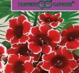 Семена  Глоксиния  Аванти  красная  с  белым краем 5шт