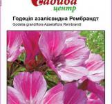 Семена годеции азалиевидной Рембрандт 0,2г