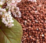 Семена гречки на сидерат 1кг