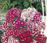 Семена Гвоздика Турецкая низкорослая смесь 0,5г