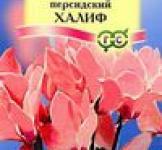 Семена Цикламен Халиф персидский* 3 шт. (ТМ Гавриш)