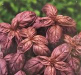 Семена Базилик Красный рубин 0,25г