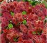 Семена Агератум Калинка* 0,1 г серия Чудесный балкон Н10 (ТМ Гавриш)