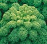 Семена капусты листовой Зеленая 0,5г