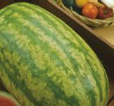 Семена арбуза Каролина 1г