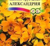 Семена Кассия Александрия 3шт