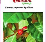 Семена Кофейное  дерево  Арабика 1г