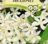 Семена Клематис короткохвостый Звездочет 0,05г (Гавриш)