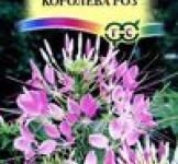 Семена Клеома Королева роз 0,3г (Гавриш)