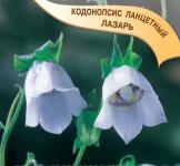 Семена кодонопсиса ланцетного ТМ «Гавриш» (0,05г)