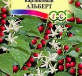 семена кофе аравийского карликовый Альберт ТМ «Гавриш» (5шт)