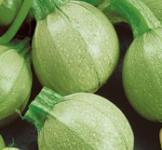 Семена кабачков Колобок 2г