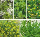 Семена Кухонные пряности для консервации и соления 3,1г (Гавриш)