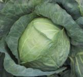 Семена капусты белокачанной Копенгаген маркет 0,5кг
