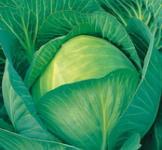 Семена капусты белокочанной Козачок F1 (рс) 20шт.