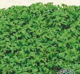 Семена Кресс-салат Цельнолистый 1г