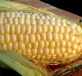 Семена кукурузы Любава 1кг (среднеранний сорт)